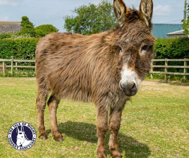 Blossom, who lived at the Isle of Wight Donkey Sanctuary.