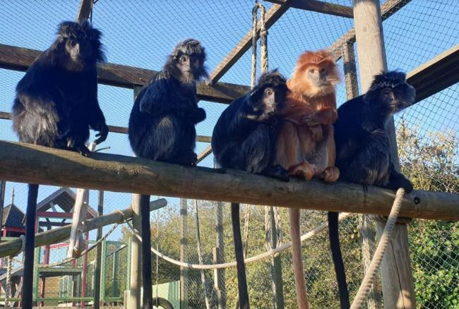 Monkey Haven will welcome back visitors from Wednesday.