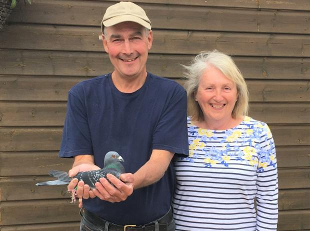 Isle of Wight County Press: Islanders Rod and Linda Rann, who have enjoyed much success racing pigeons.