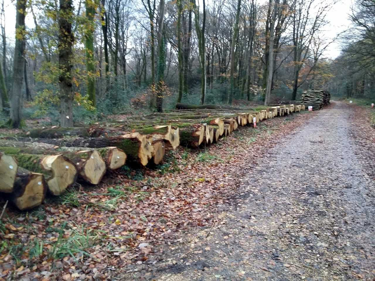 The felled trees stacked at Parkhurst Forest. Picture by George Chastney.
